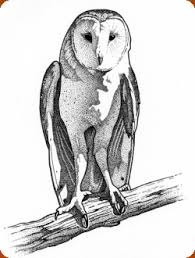 desert owl coloring page red cliffs reserve barn owl fun stuff turbary woods