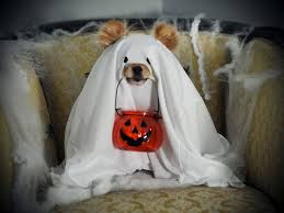 Funny Dog Halloween Costumes 79 Pet Halloween Costumes Images Pet Costumes