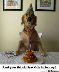 Birthday Dog Meme - birthday dog by recyclebin meme center