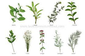 les herbes de cuisine alimentation et cuisine alimentation fines herbes image