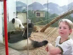 the reynolds u0027 wrap zoo atlanta