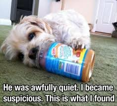 dog peanut butter lmfao i m dying right now tickles me pink dog
