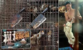Dogs At Dinner Table Stolen Pets Being Slaughtered At China U0027s Biggest Dog Meat Festival