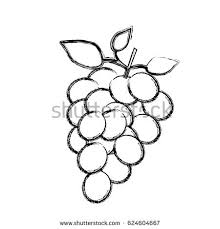 acai berry vector superfood drawing set stock vector 484984657