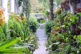 terrace gardening wishbone school launches an organic terrace gardening workshop