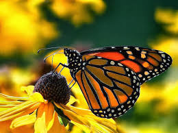 of the jungle symbiotic relationship of butterfly and flower