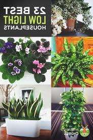 beautiful bathroom plants low light bathroom ideas