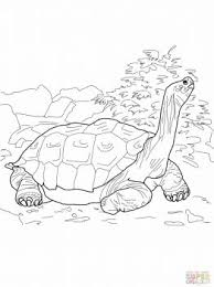 451 animal colouring pages images free