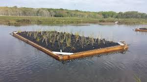 Rhode Island vegetaion images Floating islands 2 0 saltmarsh habitat avian research program jpg