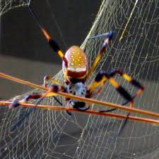 and along came a spider gallivance