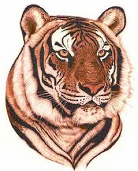 tattoos of tigers high quality photos and flash designs of