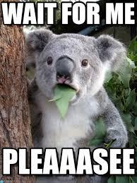 For Me Meme - wait for me surprised coala meme on memegen