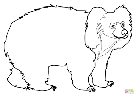 sloth bear coloring free printable coloring pages