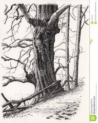 a drawing of a tree stock illustration image of snaggy 11528150