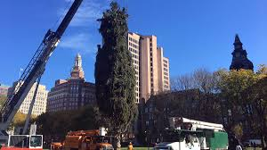new haven ct tree lighting 2017 new haven holiday tree arrives on historic green from branford nbc