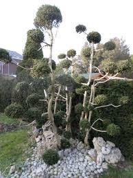 bonsai saule pleureur bonsaï page 3