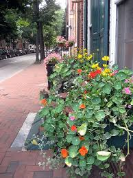 What To Plant In Window Flower Boxes - flowers for sunny window boxes