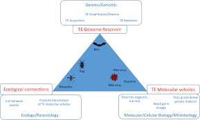 ecological networks to unravel the routes to horizontal transposon