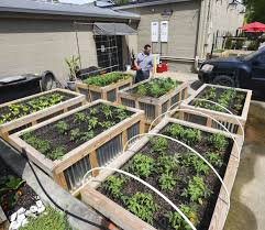 albany bistro offers new urban garden as farm to table movement