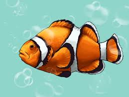 draw clownfish 9 steps pictures wikihow