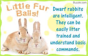 facts dwarf rabbits kill cuteness