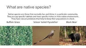 invasive non native plants invasive species what are native species native species are