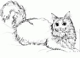 free kitty cat coloring pages coloring home