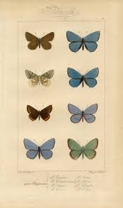 butterfly printable vintage wall decor the graphics fairy