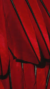 red quenalbertini black red paint color feather iphone 6 plus