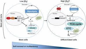 energy metabolism and energy sensing pathways in mammalian