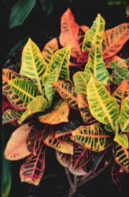list of poisonous house plants toxic house plants harmful house