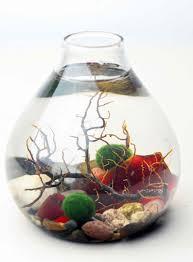 Fish Bowl Decorations Unique Aquarium Decorations Ideas Design Ideas U0026 Decors