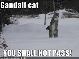 You Shall Not Pass Meme - gandalf cat you shall not pass video churchmag