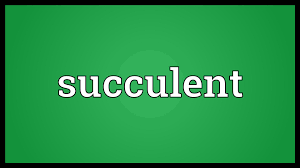 succulents meaning succulent meaning youtube