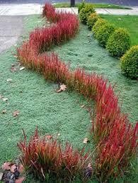the best landscaping plan ideas combination colors plants and