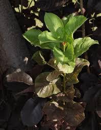 a leaf of a different color u2014 lawns gardens u0026 trees