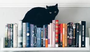cat black cat bookshelves pbb cats and books books and cats fleur