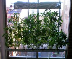 hydroponic garden systems home home outdoor decoration