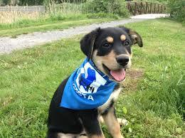asista foundation service dogs québec service dog ptsd