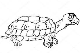 hand drawn sketch of turtle u2014 stock photo n trifunovic 9788660