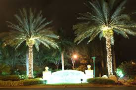 Decoration Palm Trees For Christmas by Christmas Lights For Palm Trees Christmas Lights Decoration