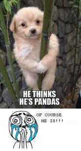 Cool Dog Meme - 35 best dog memes images on pinterest fluffy pets funny animals