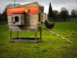 16 best chicken coops images on pinterest backyard chickens