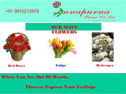 Wholesale Roses Amaryllis Wholesale Flowers In East Delhi