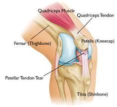 Back Knee Anatomy Common Knee Injuries Orthoinfo Aaos