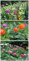 best flowers for all summer color lots of blooms great for