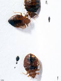 Can Bed Bugs Survive Outside Get Rid Of Bedbugs Skin And Beauty Center Everyday Health