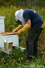 wmdsc 0036 keeping backyard bees