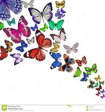 colorful background with butterfly stock photo image of liquid