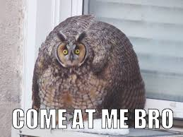 Come At Me Meme - come at me bro owl meme for facebook comments